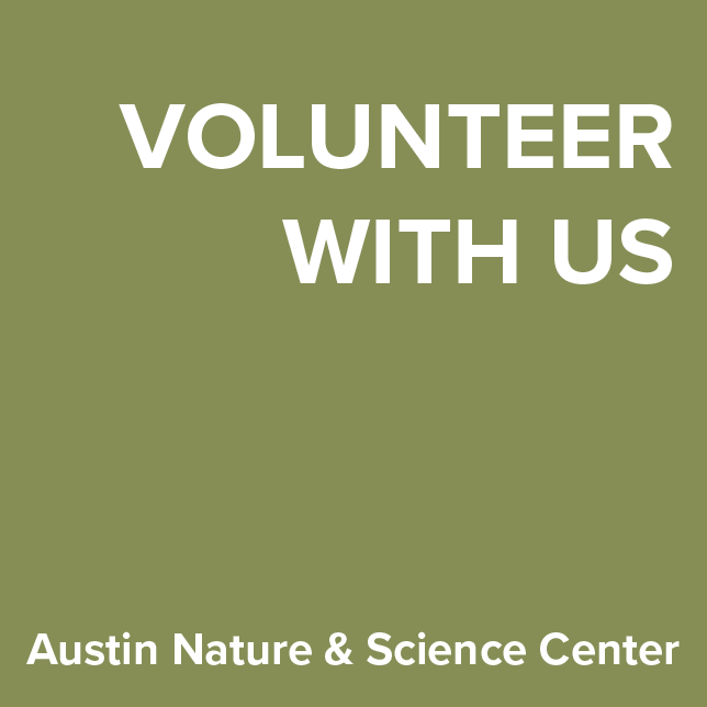 Volunteer at ANSC