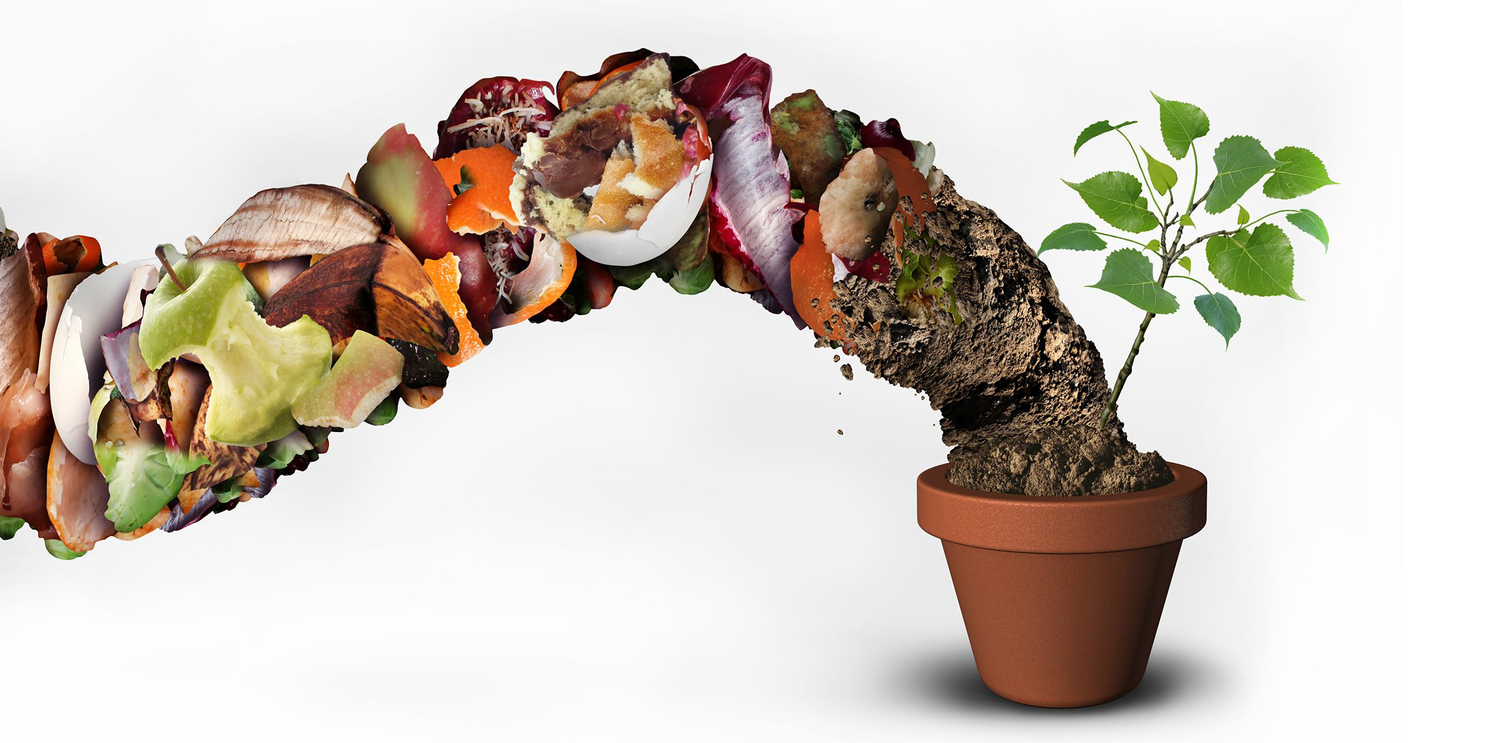 food scraps are transformed into compost