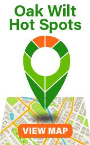 Oak Wilt Hot Spot Map