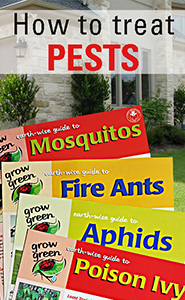 How to Treat Pest