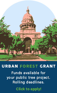 Urban Forest Grant