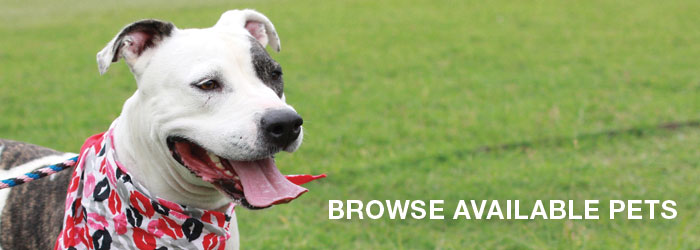 Browse Available Pets