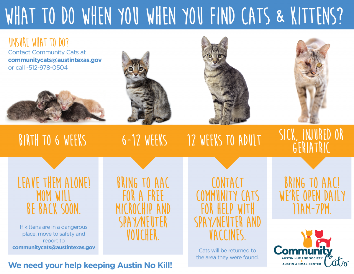 At What Age Can You Spay Cats