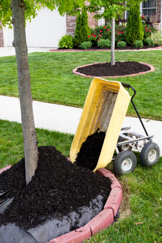 Free Mulch Is Great Mulch Austintexas Gov
