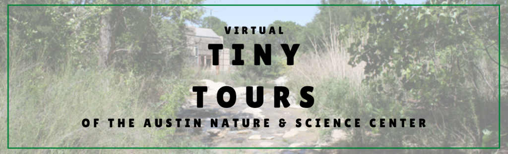 Virtual Tiny Tours of the Austin Nature & Science Center