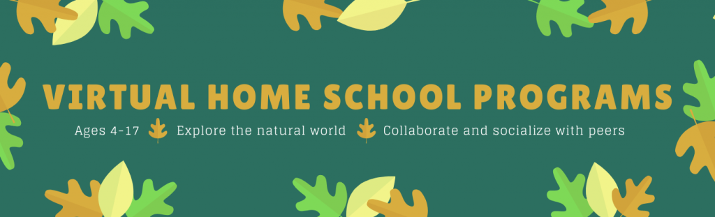 Virtual Home School, Ages 4-17, Explore the natural world, Collaborate and socialize with peers.