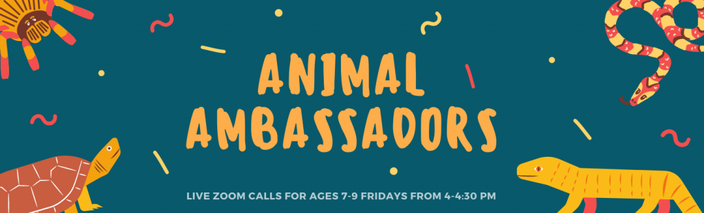 Animal Ambassadors, Live Zoom calls for ages 7 - 9 Fridays from 4 - 4:30pm.