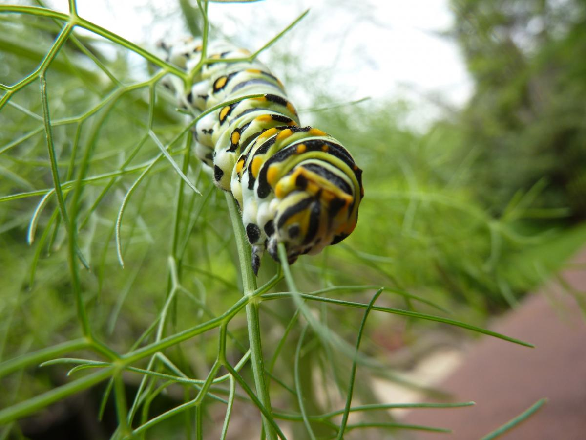 10 Ways to Love Our Pollinators | AustinTexas.gov