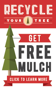 recycle your holiday tree image
