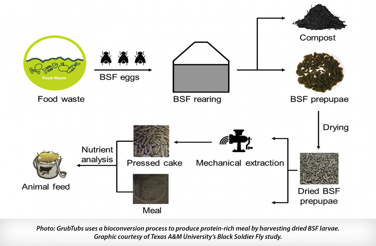 Image: GrubTubs uses a bioconversion process to produce protein-rich meal by harvesting dried BSF larvae. Graphic courtesy of TAMU's BSF study.