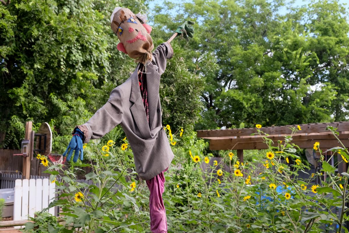 A scarecrow among blooming sunflowers.