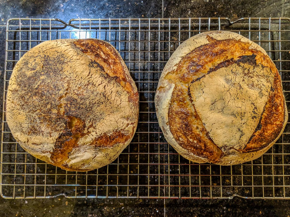 Close-up of two loaves of freshly-baked sourdough.