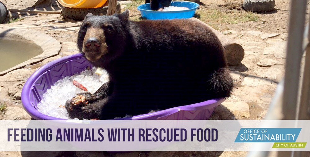 "Photo of a bear eating food in a purple tub. Text: ""Feeding animals with rescued food"""