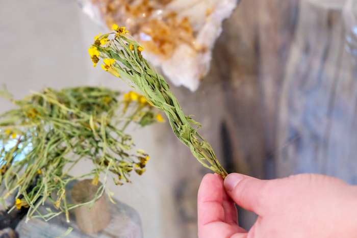 A hand holding a dried plant with green leaves and yellow flowers.