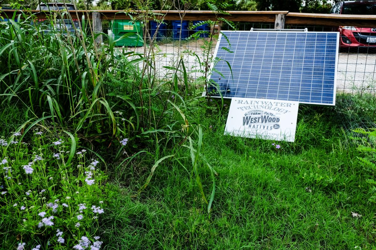 Small solar panel with tall grass and flowers around it.