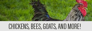 Chickens, bees, goats, and more!