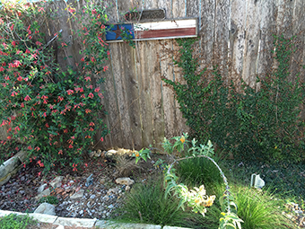 image of rain garden by fence