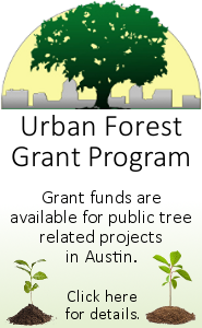 Urban forest grant program