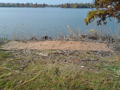 "A king sized blanket covering the ground near Ladybird Lake is actually a ""seed island"" or a streambank restoration method."