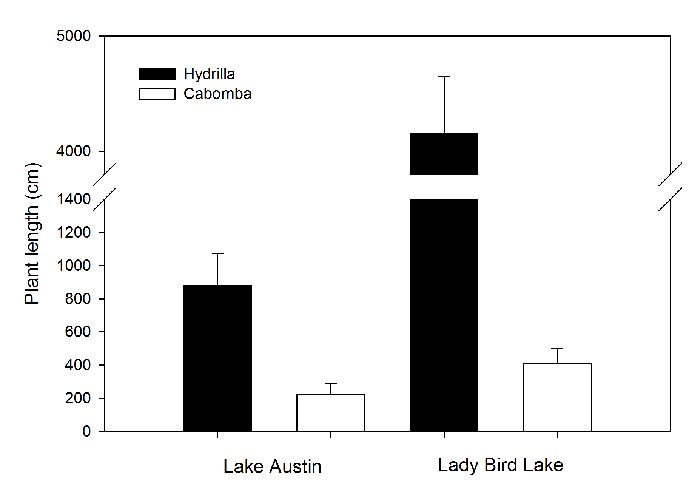 A comparison of Hydrilla & Cabomba in Lake Austin and Lady Bird Lake.