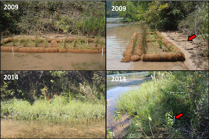 Before and after pictures of two coir log shoreline stabilization sites on Lake Austin from the study conducted from 2009-2014.