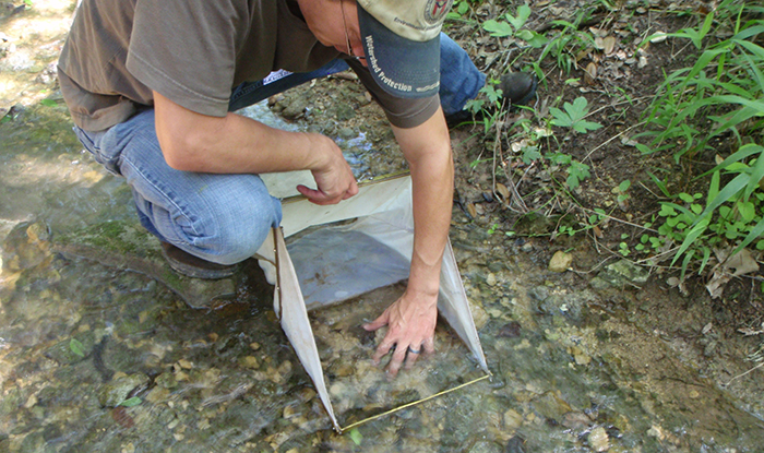 Scientists collect aquatic invertebrates, pick them from white pans and bring them back to the lab for identification