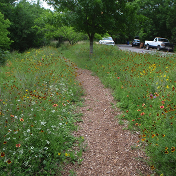 The City of Austin has resources to help people choose aesthetically pleasing plants for trails.