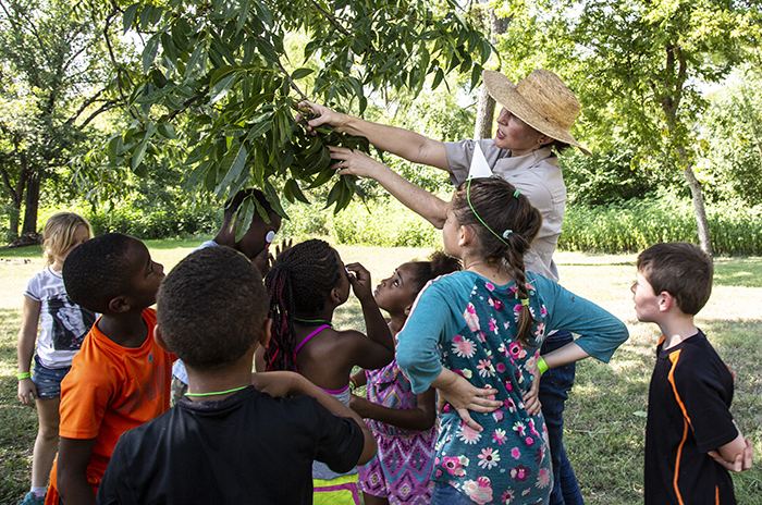 A community Tree Preservation Division staff host a tree education activity at Bartholomew Park.