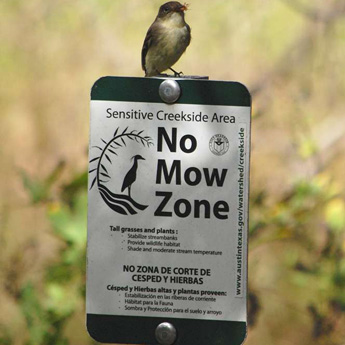 A bird sitting on a No Mow Zone sign.