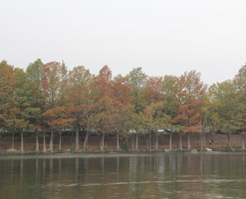 Scenic trees next to Lady Bird lake. Beautiful trees in fall colors line the banks of the peaceful Lady Bird Lake.
