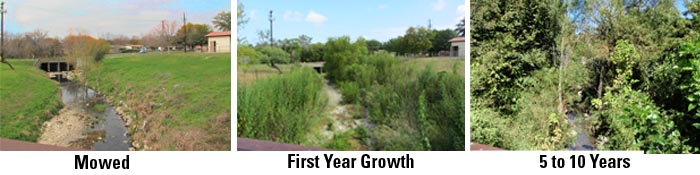 Examples of mowed, First Year Growth, and 10 year Growth.