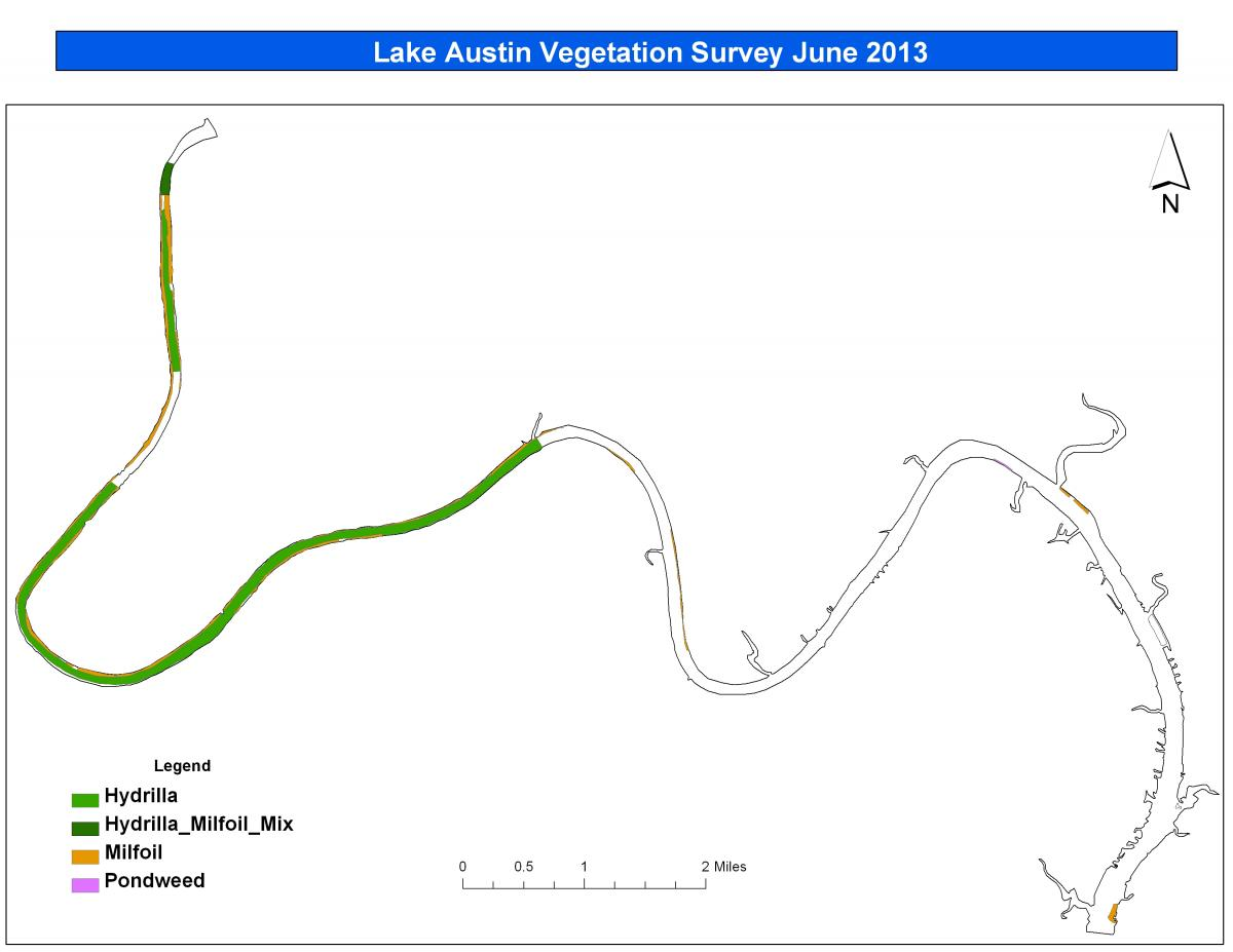 Current situation austintexas the official website of the lake austin vegetation june 2013 pooptronica