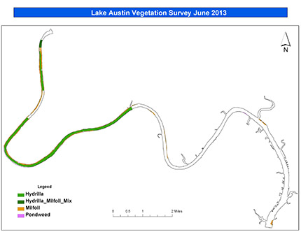 Lake Austin Vegetation June 2013