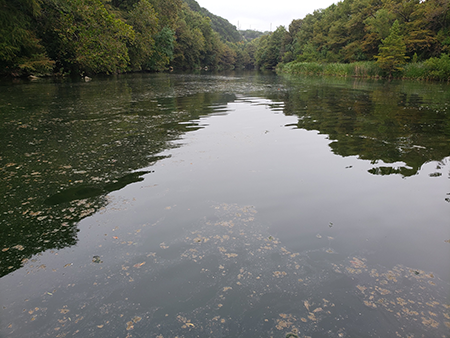 Algae at Red Bud Isle on October 14.