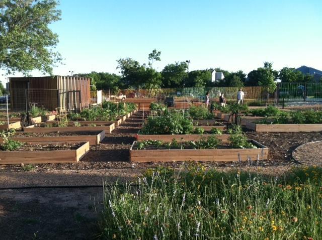 The North Austin Community Garden Bringing residents