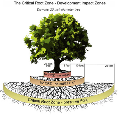 Tree and Natural Area Preservation Development Services