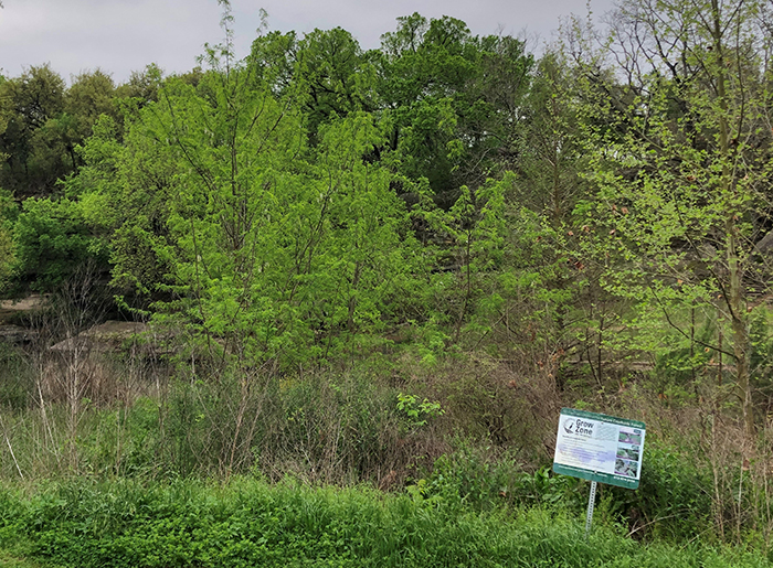 """Grow Zone - This stretch of the creek bank is not mowed so that native plants can grow."""