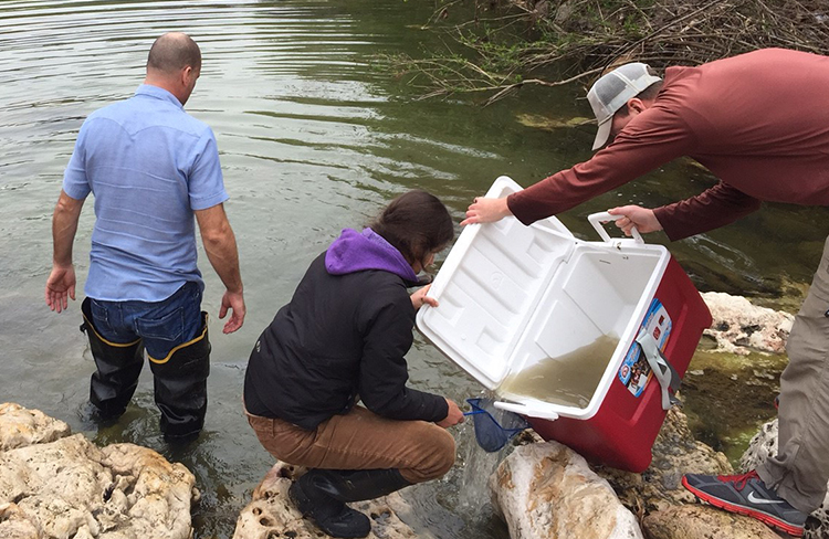 Coolers of oxygenated water hold the fish until biologists identify, count, and release them into another section of the creek.
