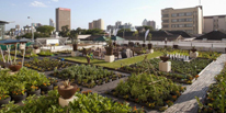 Sustainable Urban Agriculture and Community Gardens Program
