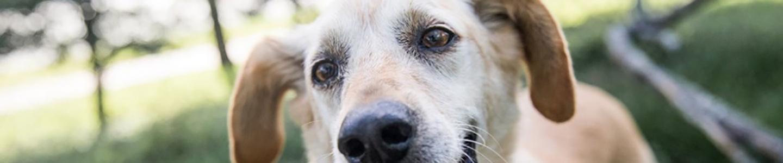 Adopt A Pet Austintexas Gov
